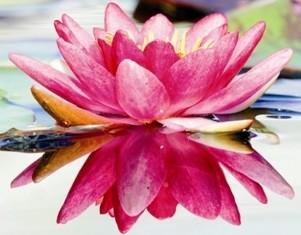 lotus smaller